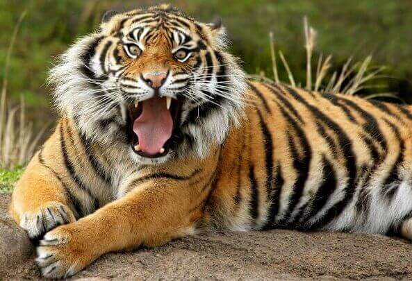 national-animal-of-india
